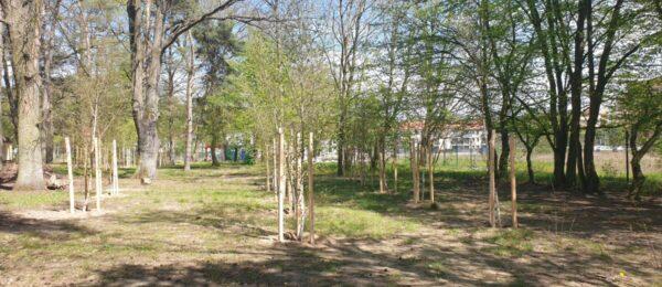 89 nowych drzew na terenie naszego Ośrodka